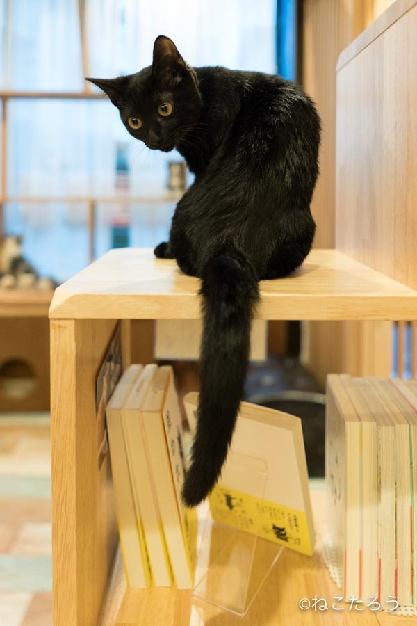 保護猫写真家ねこたろう_びっくりお目々のクロネコ5