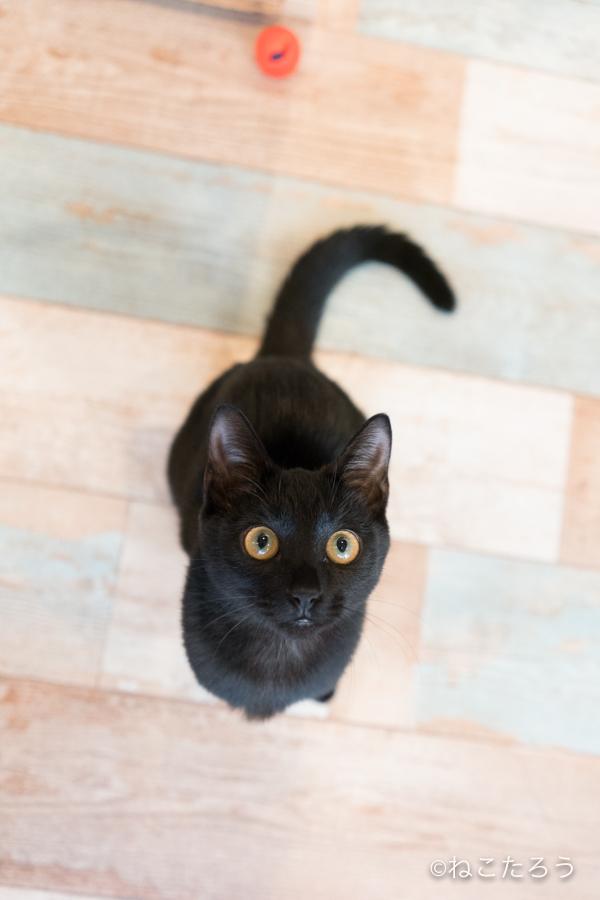 保護猫写真家ねこたろう_びっくりお目々のクロネコ6