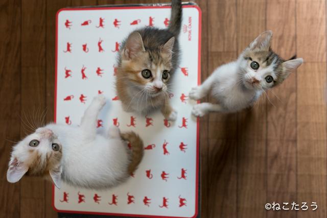 ねこたろう_仔猫の体重測定9