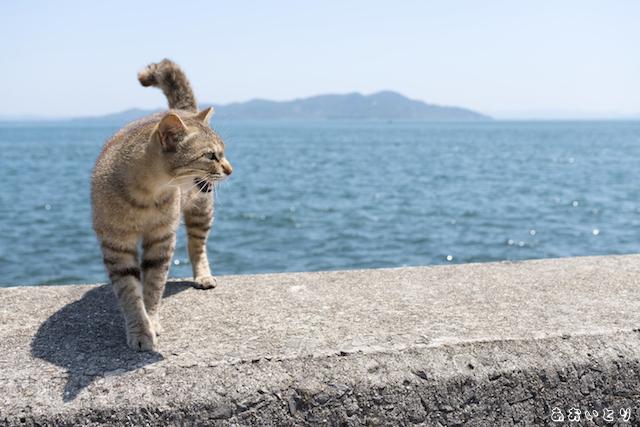 写真家あおいとり_海と猫1