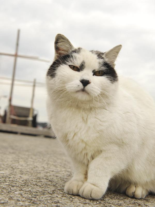 ボス猫JAPAN_強面BOSS