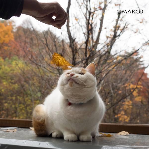 落ち葉が好きなのです1