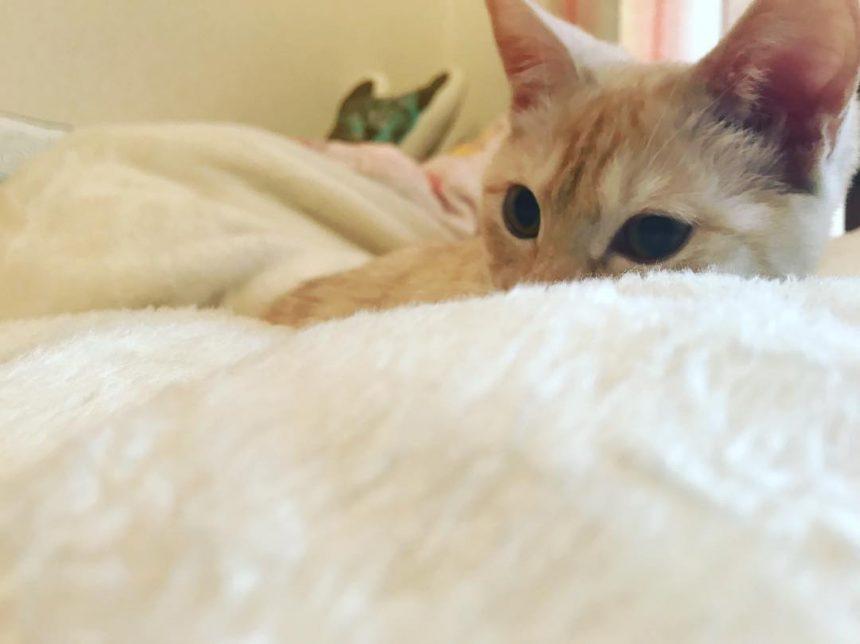 昼間のシルク毛布はボクのもの♪