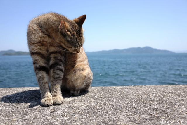 写真家あおいとり_海と猫3