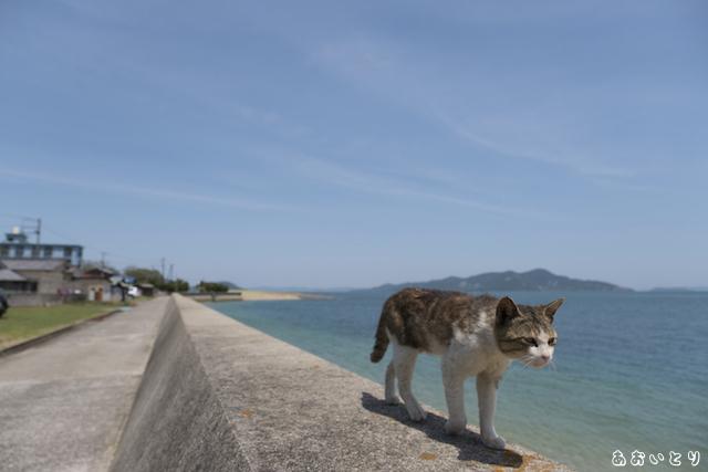 写真家あおいとり_海と猫4
