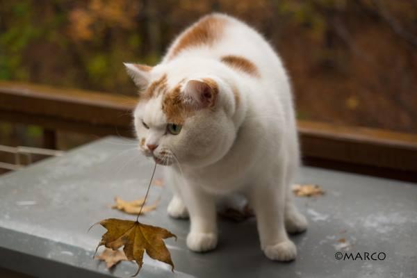 落ち葉が好きなのです4