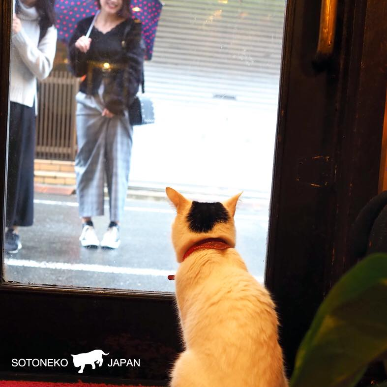 ソトコレ_Cat lovers