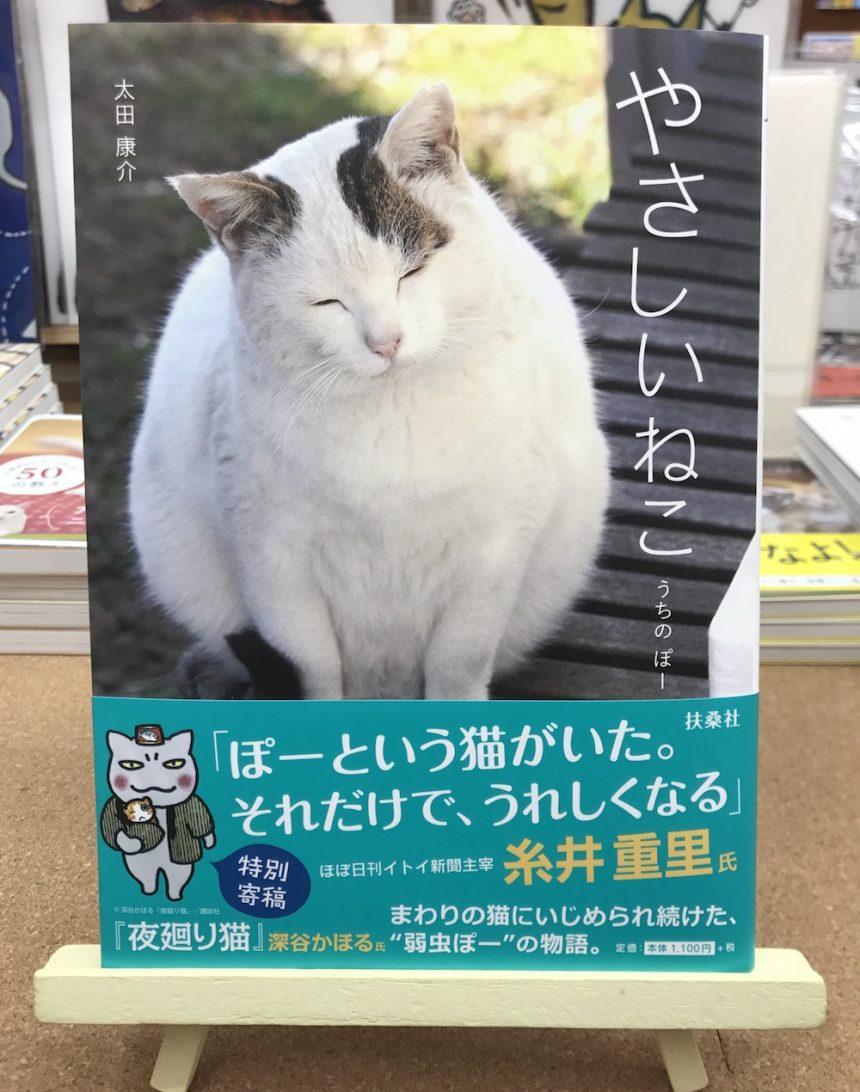 """""""町内最弱""""の野良猫ぽーが、太田家最弱の家猫ぽーに!『やさしいねこ』"""