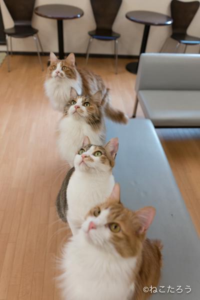 猫をソファーの背に誘導すると、一列にならんで可愛いのです。3