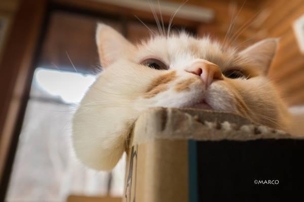 実家の猫「メイ」のほっぺたはお餅のようです。