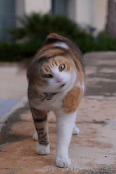 三毛猫ドリル〜 あなたの心にまっしぐら! @スピノーラ(マルタ)