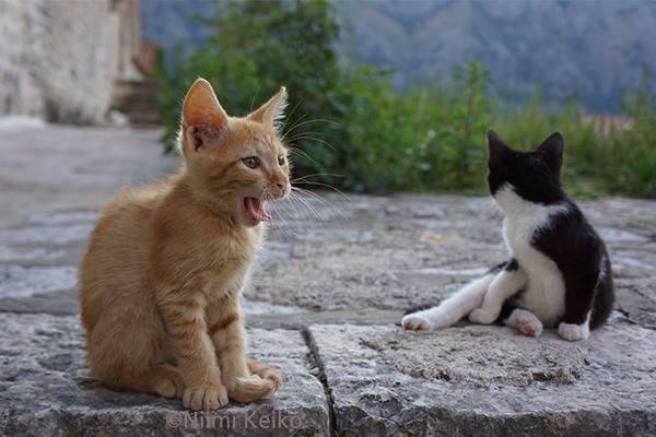 子猫同士の朝の取っ組み合いが終わって