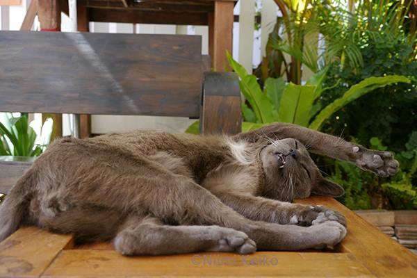 オープン・カフェの猫…@チェンマイ(タイ)