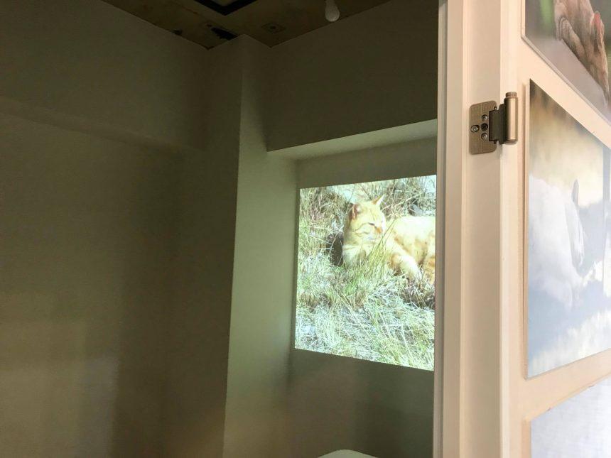 動画の小部屋もあります