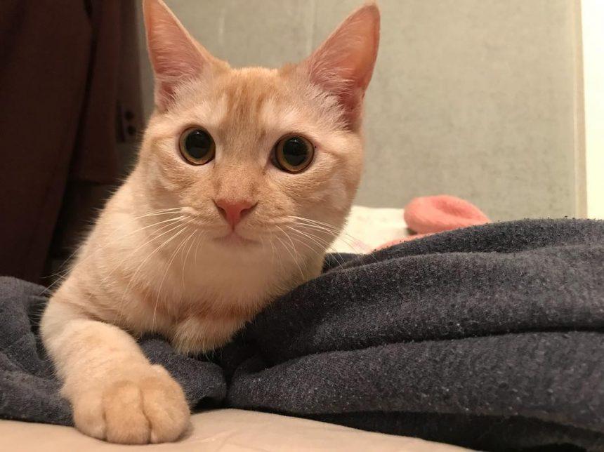 洗濯物をとりこみ〜その上に乗っかる〜ネコのデフォルト