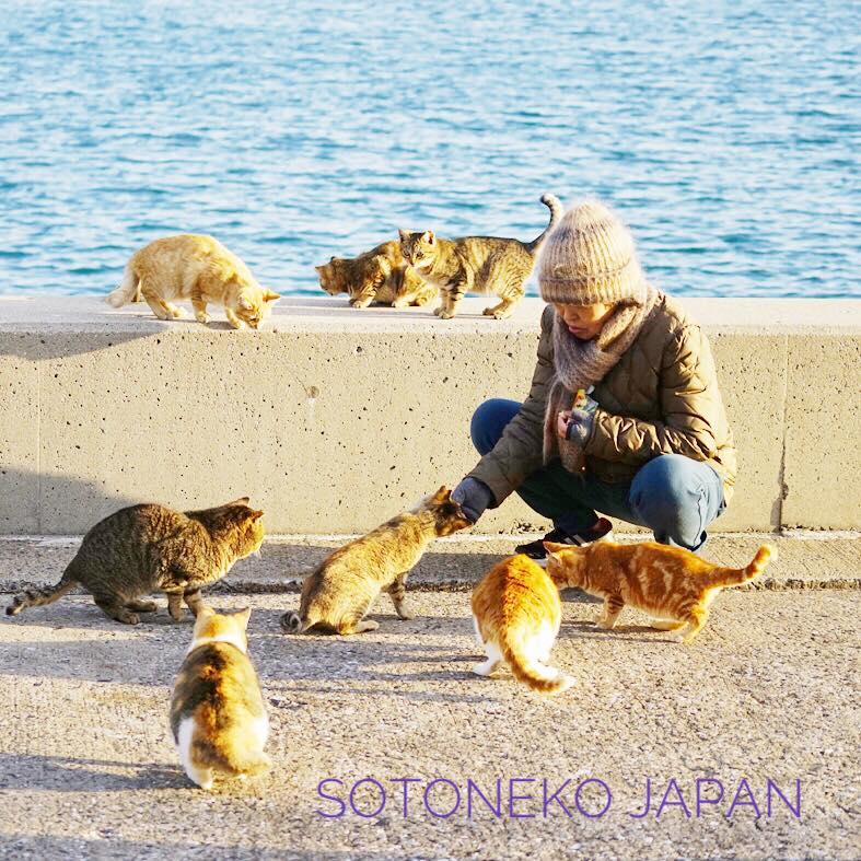 Cat lover.作品2