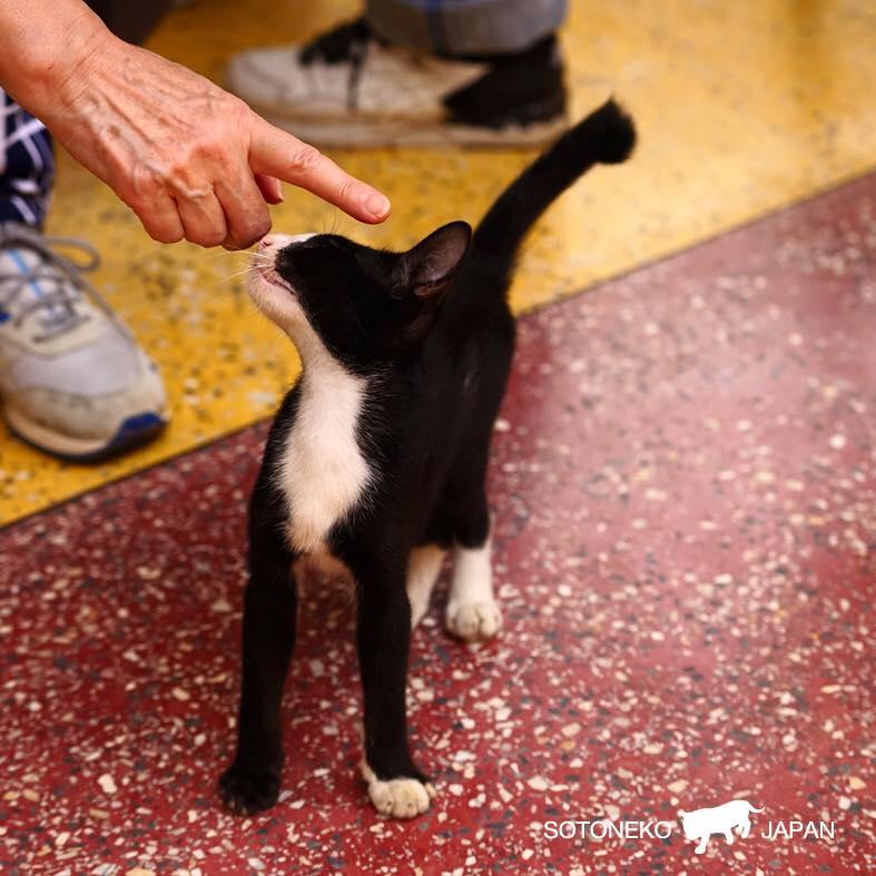 Cat lover._作品1