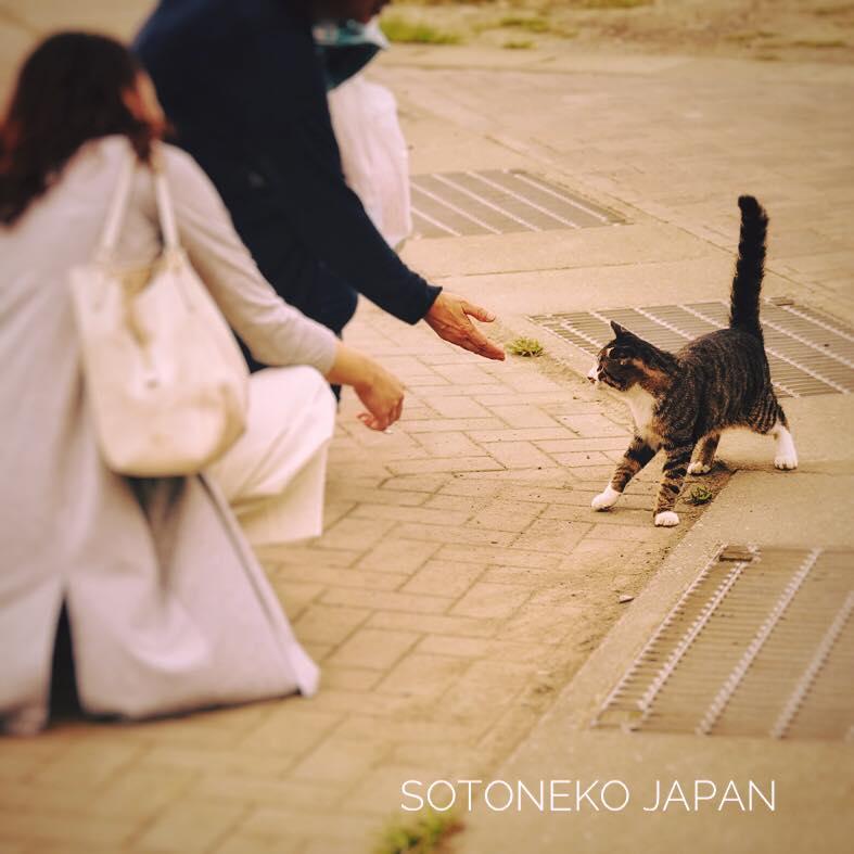 Cat lover.作品3