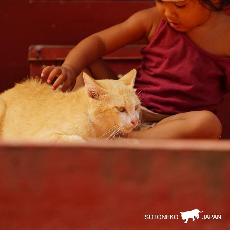Cat lover作品2
