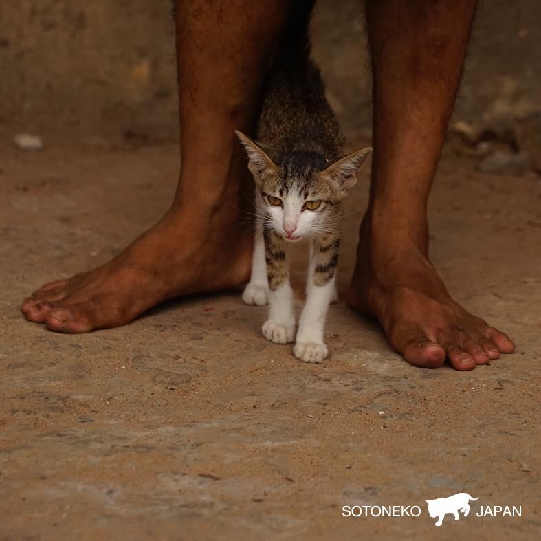 Cat lover作品1
