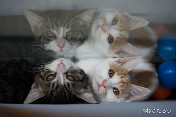 猫の万華鏡みたいですね。