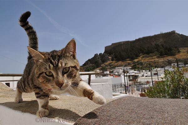 「かわいい猫ちゃんね」って言ってくれるので…@ロドス島(ギリシャ)