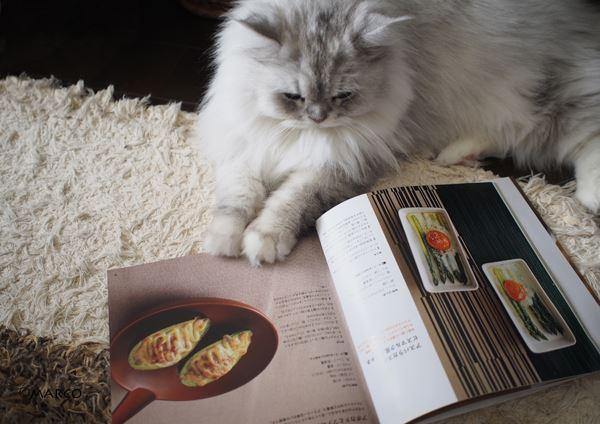 今日の夕飯何にする?