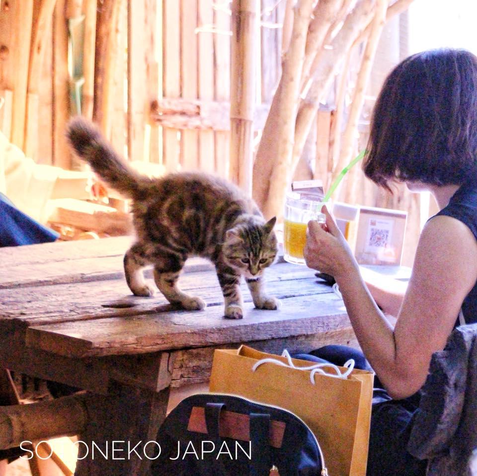 Cat lover.2