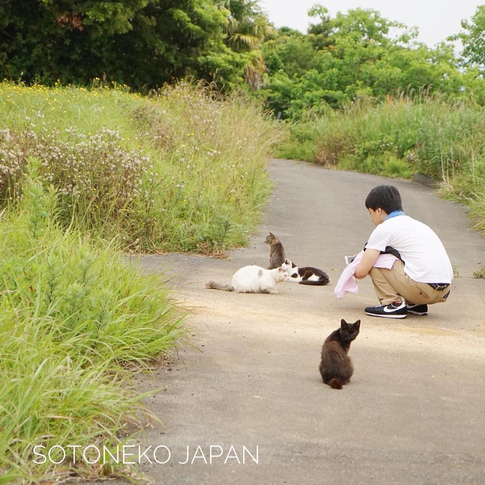 Cat lover.3