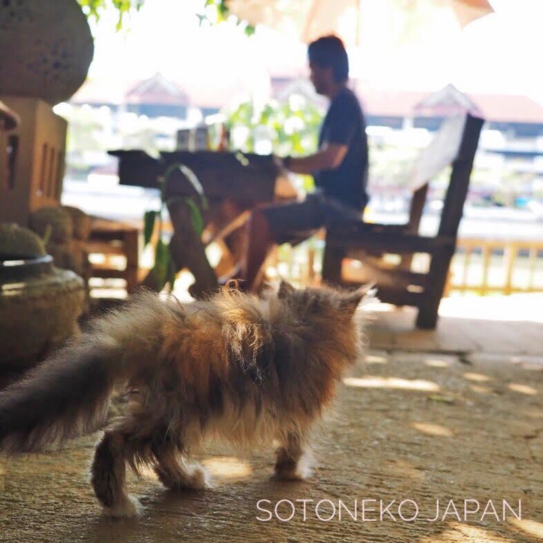 Cat lover_Vol.9…3作品