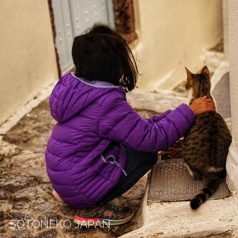 Cats lover1