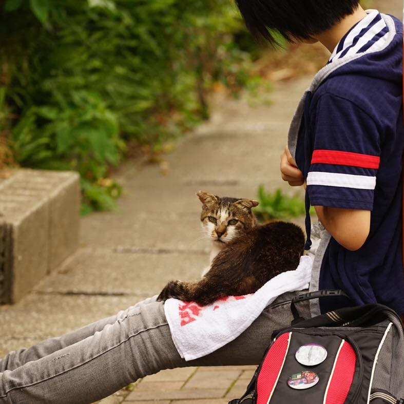 Cats lover2