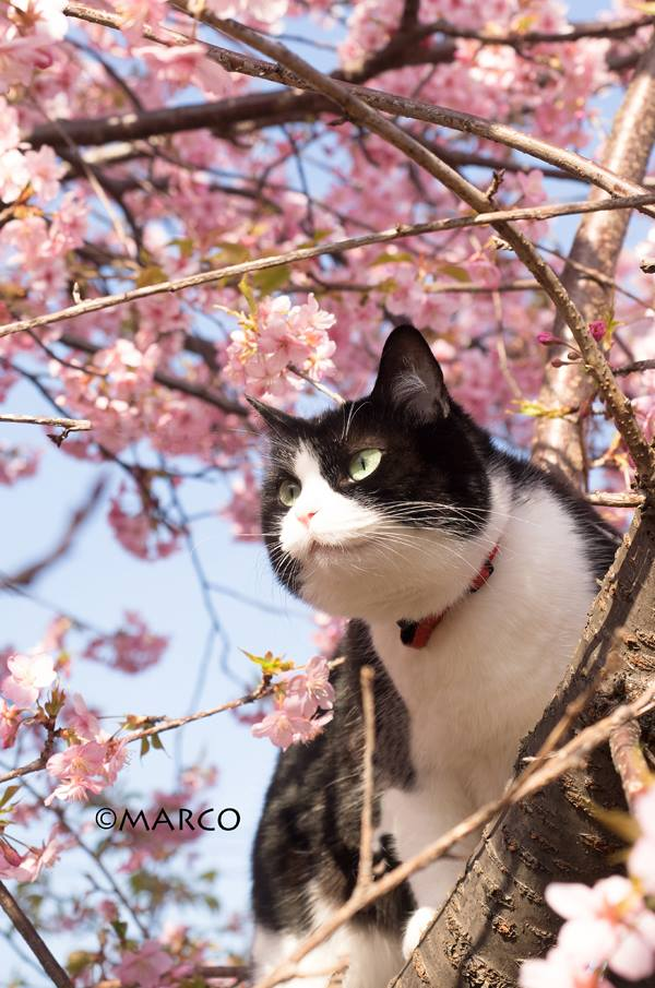 元外猫の静岡(←白黒猫の名前)は木登りが得意です。