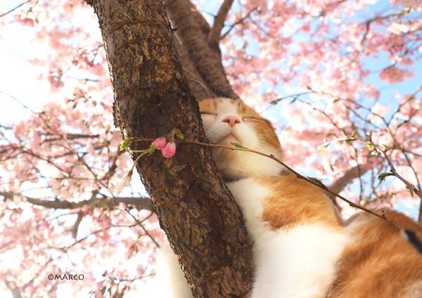 関東地方はお花見日和になりそうです(=^・^=)