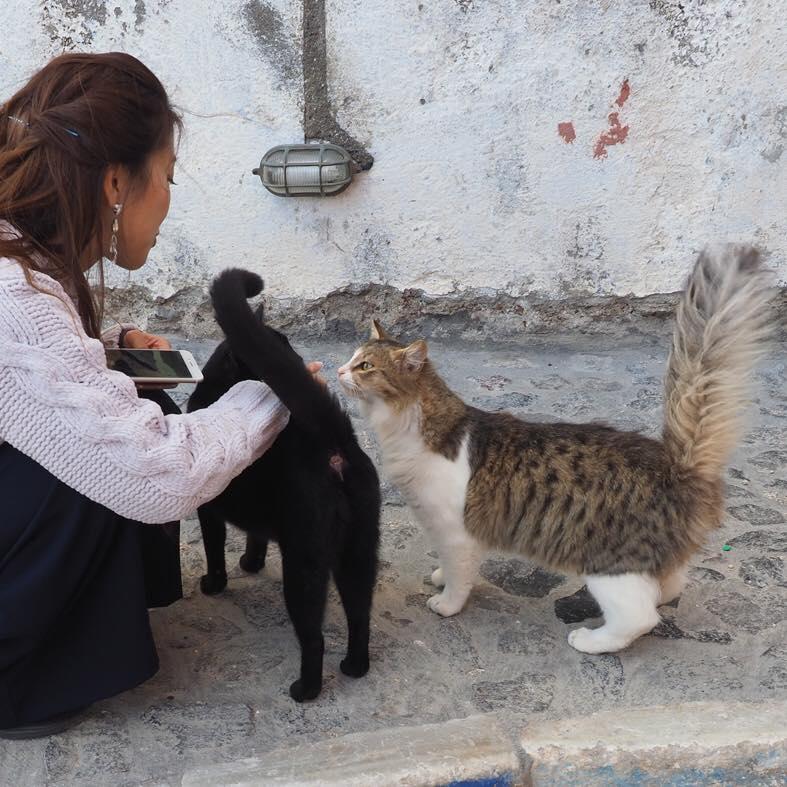 Cat lover.4