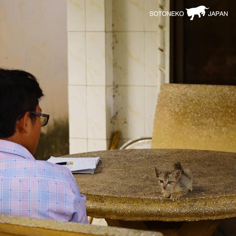 Cat lover.1