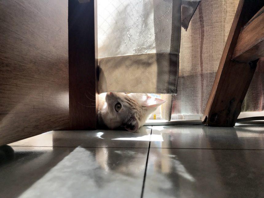 朝の日課…窓越しの日向ぼっこ