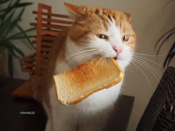 せっかくキッチンのカゴからトーストを運んできたのに