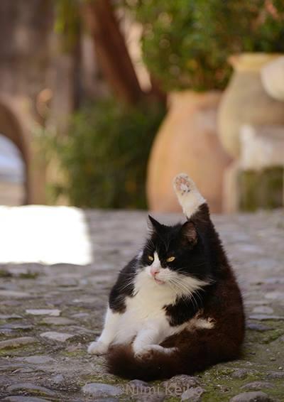 わたしはお城への出入りが許された高貴な猫。…@カーニュ・シュル・メール(フランス)