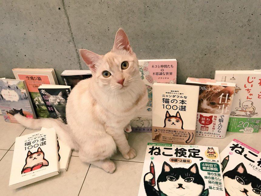 2代目猫店長のボク