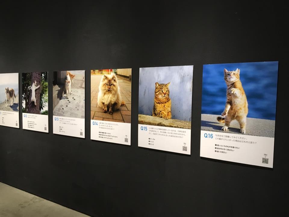 『ネコロジー・猫と心理テスト』5