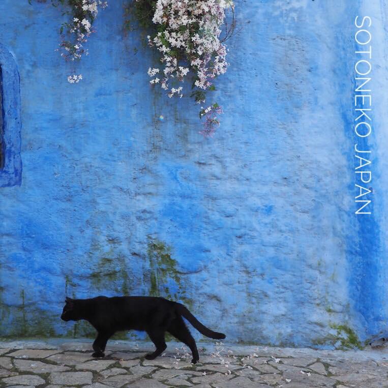 Black cat3