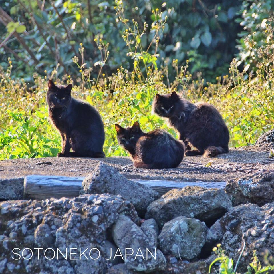 シンクロBlack cat.3