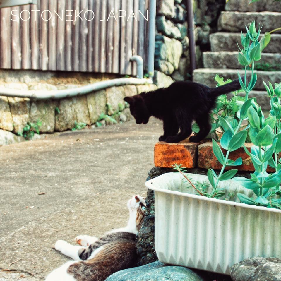 チビBlack cat2