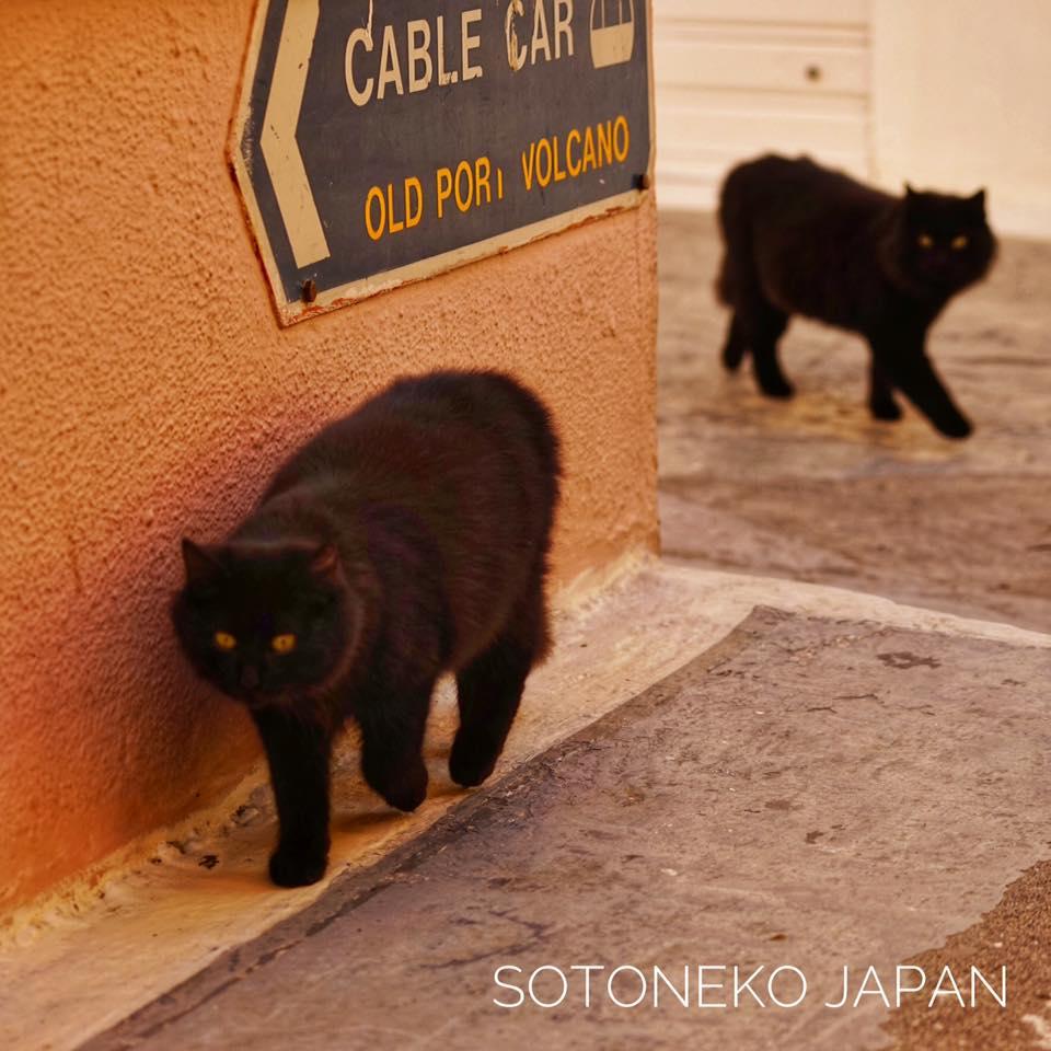 シンクロBlack cat.