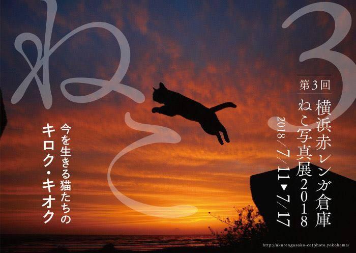 第3回 「横浜赤レンガ倉庫ねこ写真展2018」3