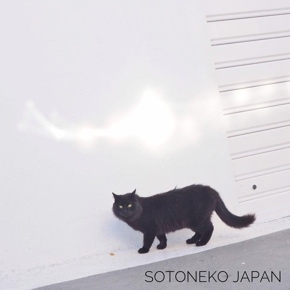 Black cat.2