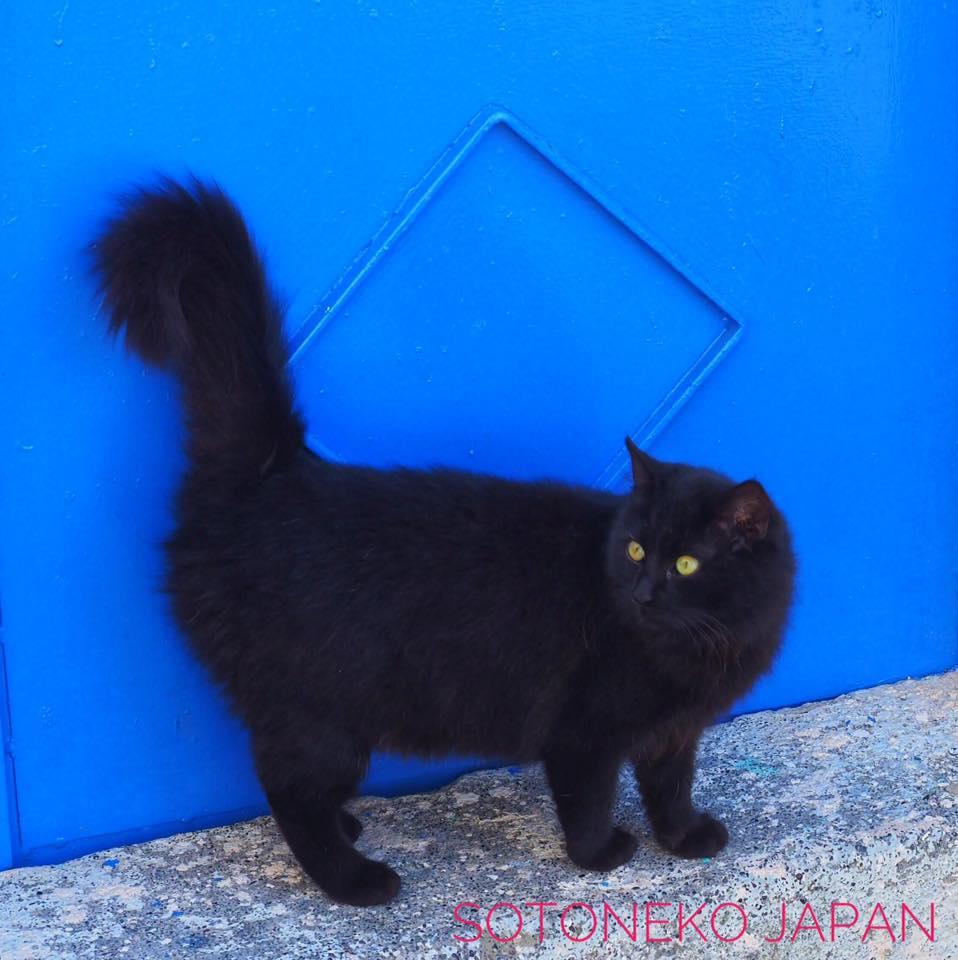 Black cat.3