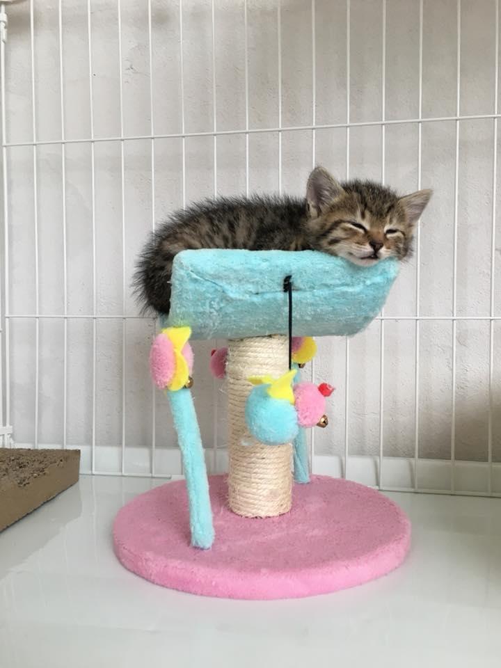 子猫軍団のお披露目会開催を予定!