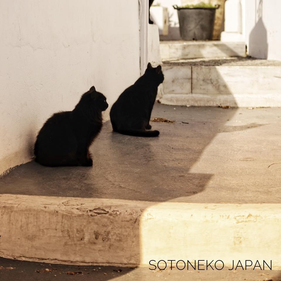 シンクロBlack cat.2